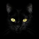 The Cat - Black on Black by Wojciech Dabrowski