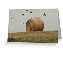 Hairy Hay Bale and Birds Greeting Card