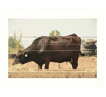 Black Cow and Tires Art Print