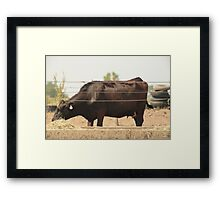 Black Cow and Tires Framed Print