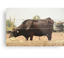 Black Cow and Tires Metal Print