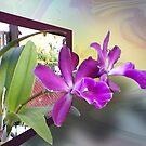 2 Orchids 4U by Ginny Schmidt