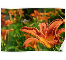 Bright garden flower Poster