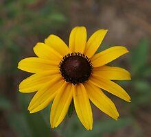 Flower by pixrit