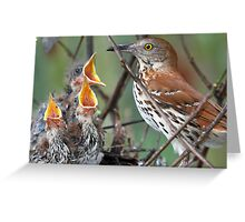Can we  please have some more, we are still hungry ! Greeting Card
