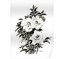 Peonies in ink Poster