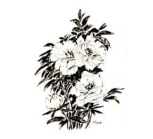 Peonies in ink Photographic Print