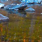 Rock turtle by MarianBendeth
