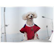 doggiedog Poster