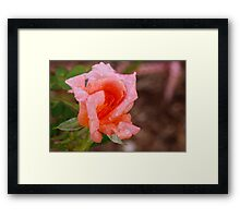 Peach refresher Framed Print