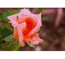 Peach refresher Photographic Print