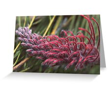 Grevillea thyrsoides, subsp. thyrsoides Greeting Card
