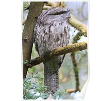 I have my eye on you  Tawny frogmouth Poster
