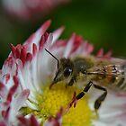 Bee by InaLina