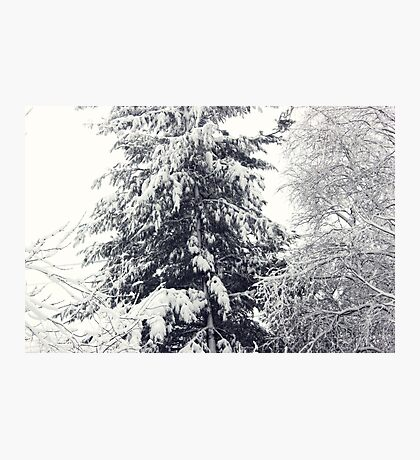 January Snowstorm Photographic Print