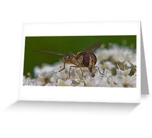 Hoverfly.. Greeting Card