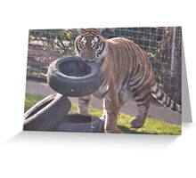 Tiger hunt Greeting Card