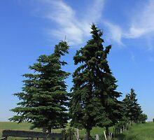 Two trees on the Alberta prairies by Jim Sauchyn