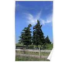 Two trees on the Alberta prairies Poster