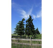 Two trees on the Alberta prairies Photographic Print