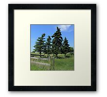 Four trees on the Alberta Prairie Framed Print