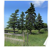 Four trees on the Alberta Prairie Poster