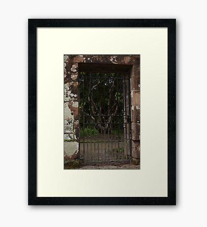 A Twisted Tree Framed Print