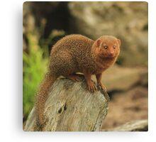"""""""Dwarf Mongoose """" Canvas Print"""