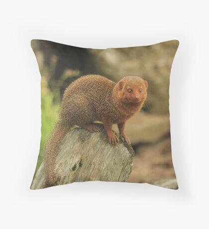 """""""Dwarf Mongoose """" Throw Pillow"""