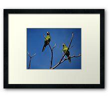 Bird's Tree - Arbol De Pájaros Framed Print
