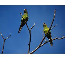 Bird's Tree - Arbol De Pájaros Photographic Print