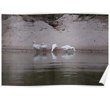 Birds in a lake in Lansdowne in India Poster