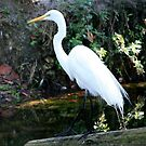 Great Egret  ~ Beauty and Balance by AuntDot