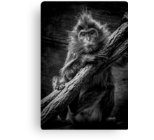 My kingdom for a banana Canvas Print
