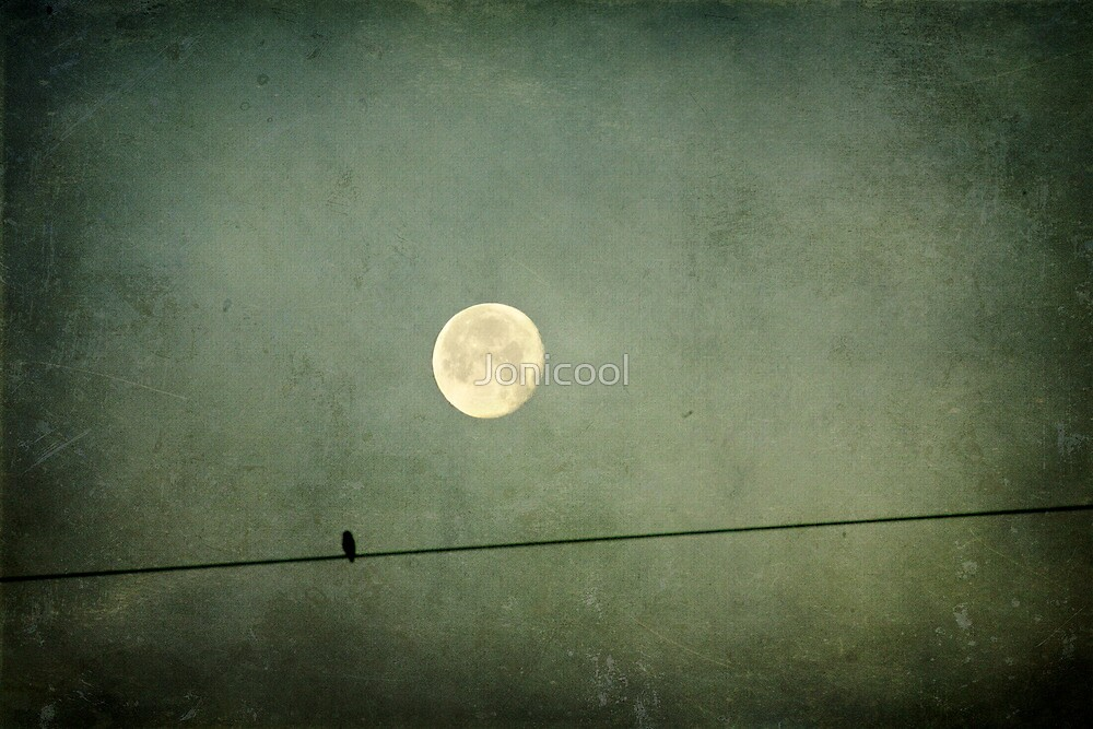 The moon and the bird by Jonicool