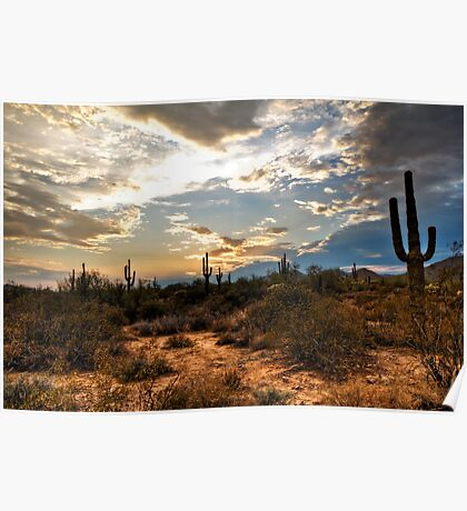 A Sonoran Desert Sunset  Poster