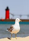 Seagull and South Haven, Michigan Lighthouse by Kenneth Keifer