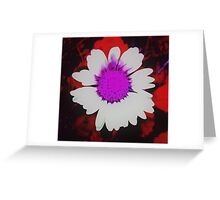 Daisy in red, is dancing with me... Greeting Card
