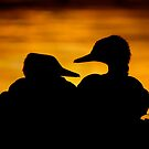 Hooded Merganser Sibling Pair Silhouette. by Daniel Cadieux