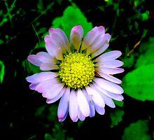 Daisy in the Dark by Kellyanne