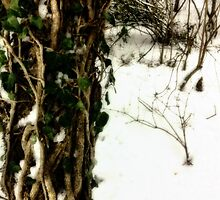 Trees in the snow by Wintermute69