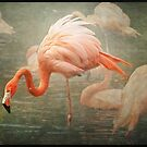 The Rosy Flamingo by polly470