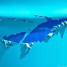 SHARK!! by Susana Weber