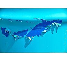 SHARK!! Photographic Print