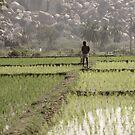 between rice fields by rainbowvortex
