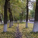 Autumn trees by MrTaskaev