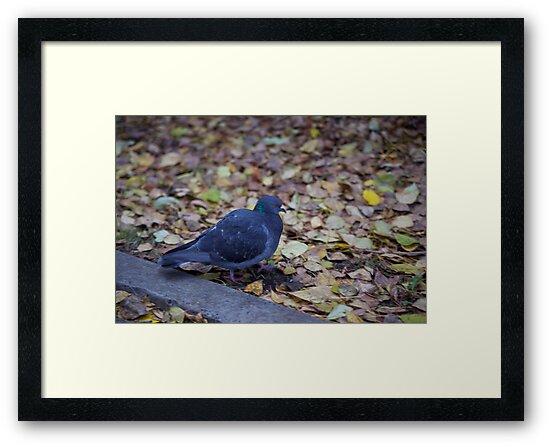 Autumn pigeon by MrTaskaev