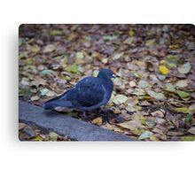 Autumn pigeon Canvas Print