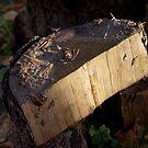 Just wood by MrTaskaev