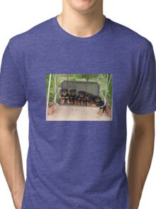 Six Rottweiler Puppies Lined Up On A Swing Tri-blend T-Shirt